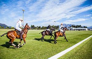 3 Polo Players going for the ball