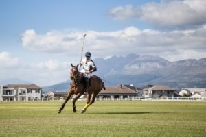 A polo player on his horse